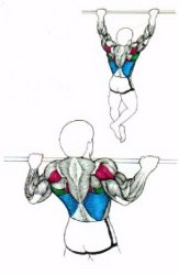 back exercises wide grip chins