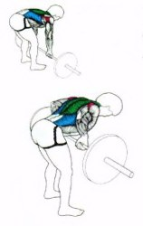 back exercises bent over rows