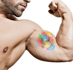 mi40x muscle cell balloon